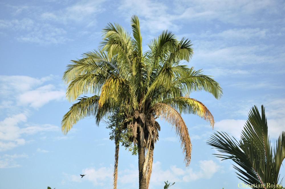 palm + blue.jpg