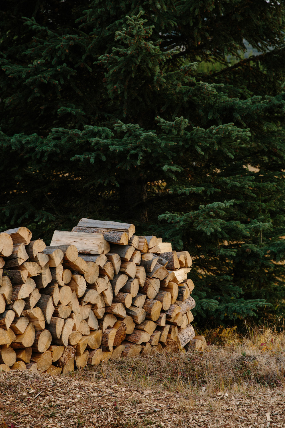 Stacked firewood for those nightly campfires and s'mores.