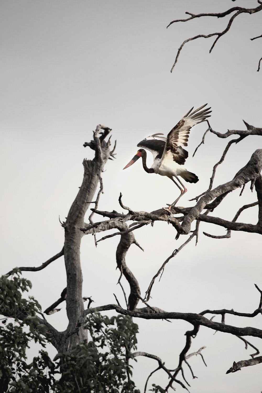Stork website.jpg