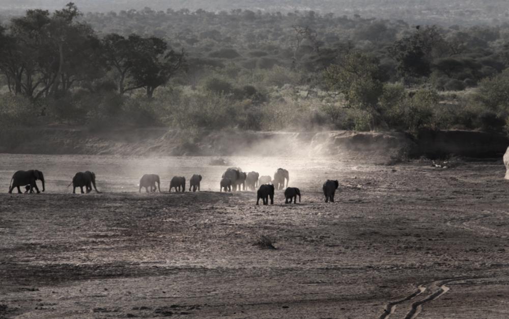 Elephant herd safari.png