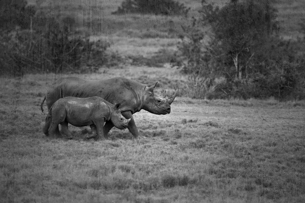 safari tribe dance.jpg