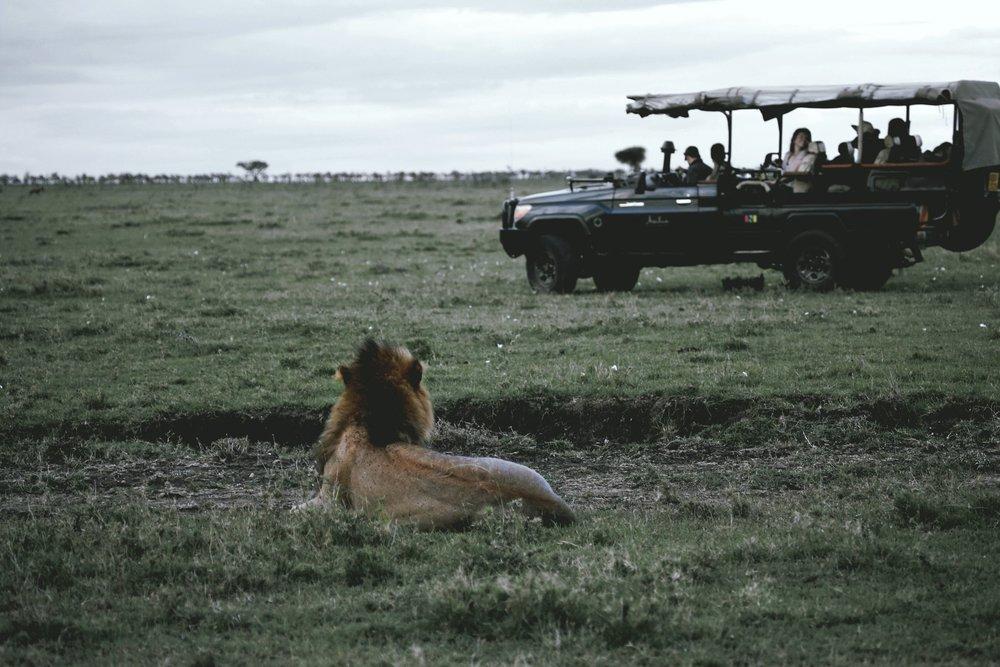 Naboisho in Maasai Mara