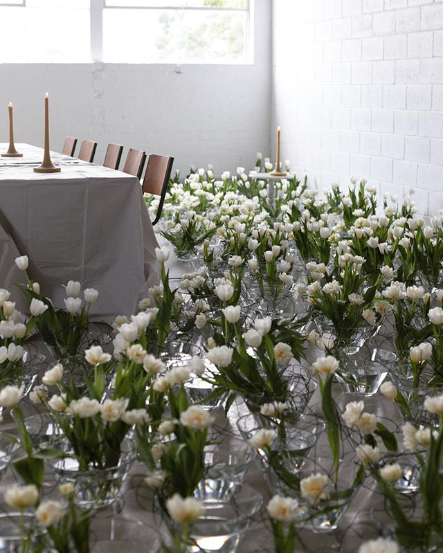 The studio looking beautiful with @afloralfrenzy's jaw dropping 1400 tulip arrangement