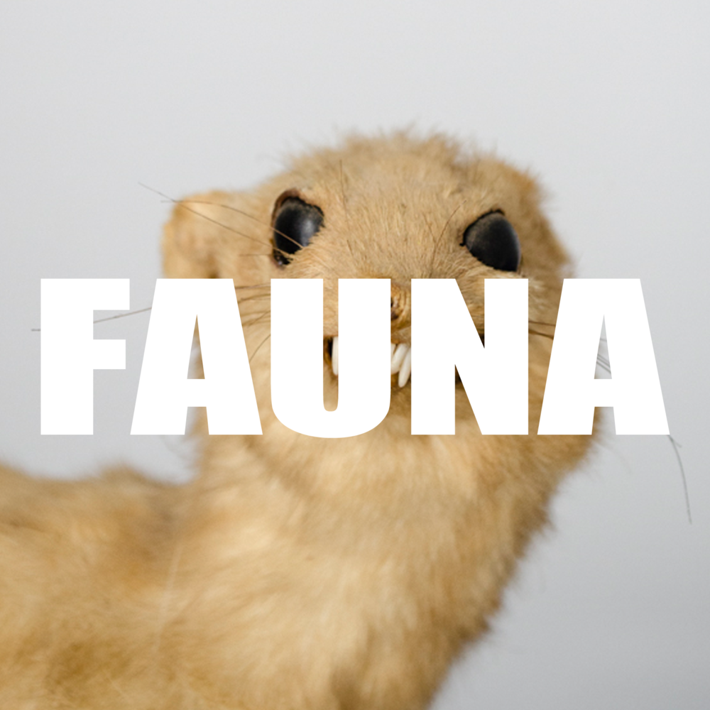 FAUNA.png