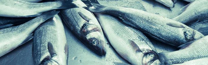 Fisheses.jpg