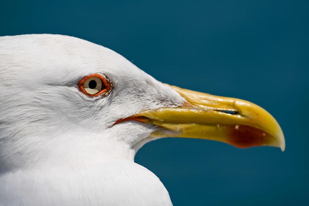 seagull's eye.jpg