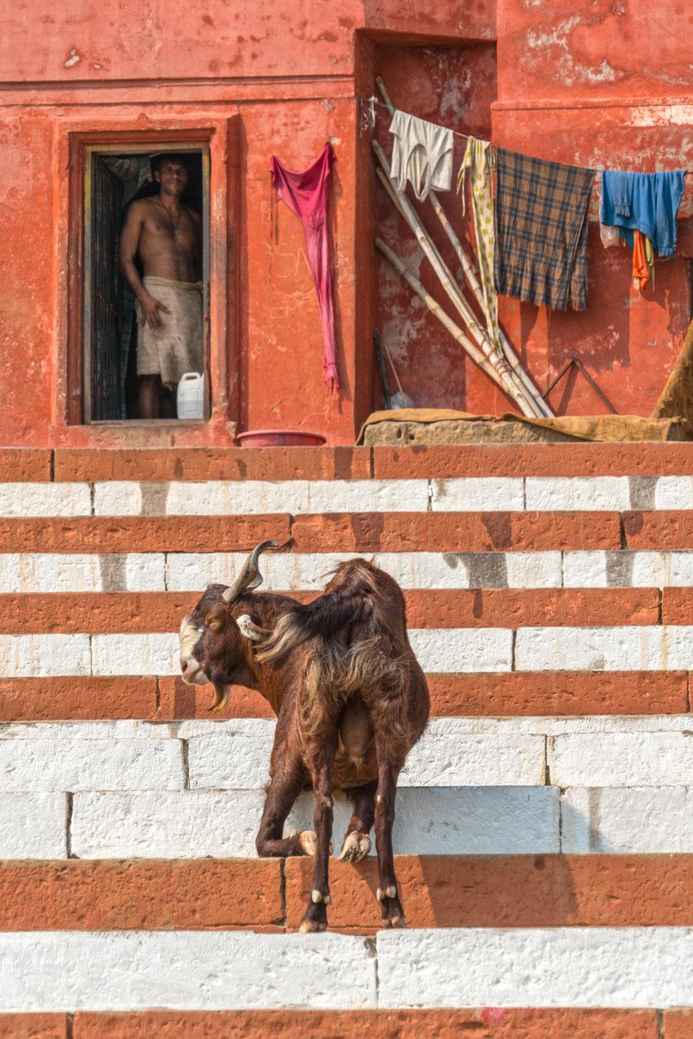Varanasi-1599-Edit.JPG