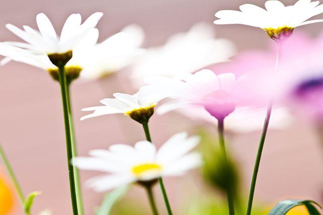 Sommerwiese als Farbinspiration