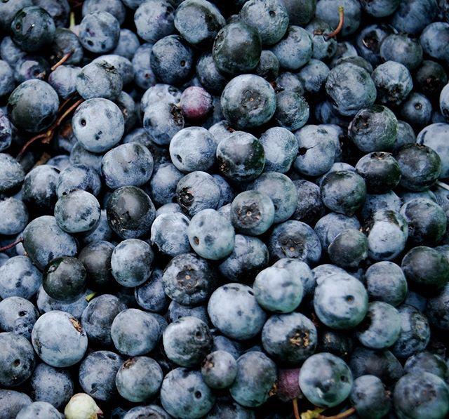 Sanfte Blautöne der Heidelbeeren