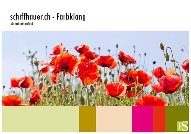Mohnblumen als Inspiration für einen Farbklang