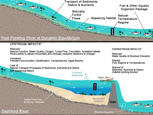 impact of large dams river
