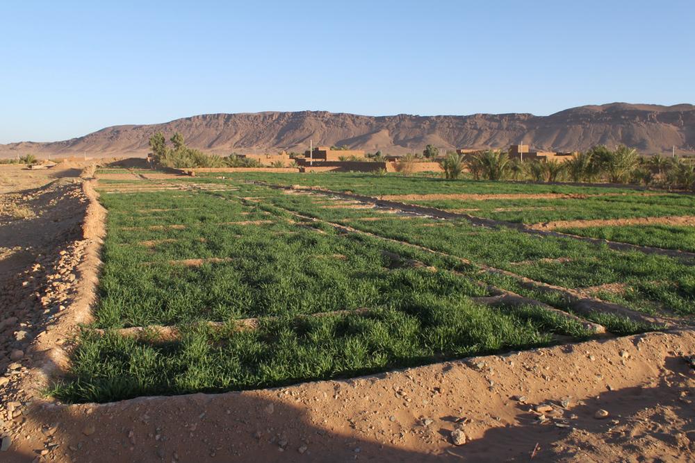 Desert Agriculture, Zagora, Morocco (Source)