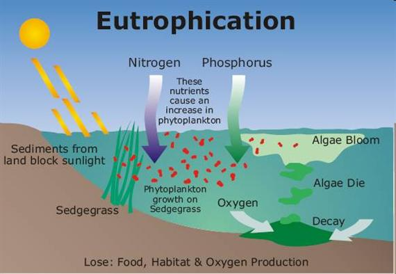 eutrophication diagram.jpg