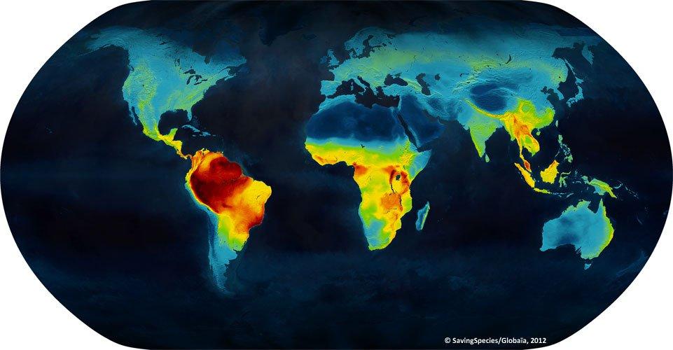 Vertebrate biodiversity map