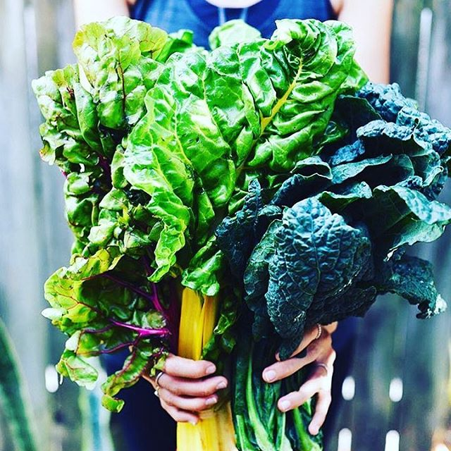 How do eat your at your greens? We drink them. Our Green One juice has up to 2lbs of raw produce pressed into every 500ml bottle. That's a lot of green. Order now online for Wednesday delivery to central London or Thursday delivery to mainland UK postcodes. 📷@thejuicedaily #crudejuice #rawfood#raw#vegan#healthy#greenjuice#cleanse#juicecleanse#greens#alkaline #fitness#inspiration #motivation #mothernature #healthylifestyle #london#coldpressed#nohpp#veganfood