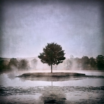 ©Colleen Henderson -  Foggy Bottom Tree