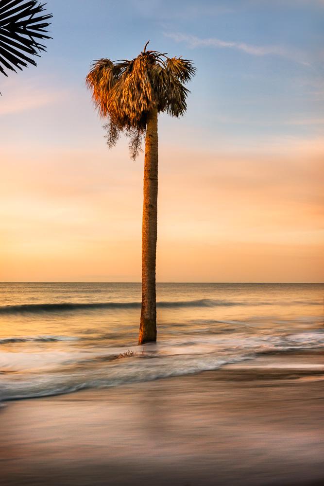 Botany Palm