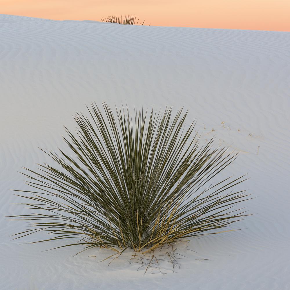 Desert Musings
