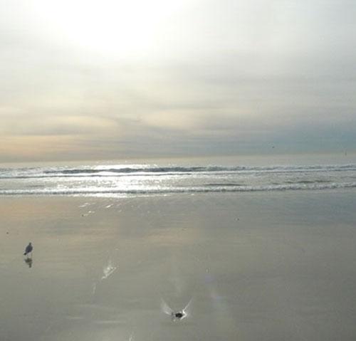 18Karen_Santa Monica Beach.jpg