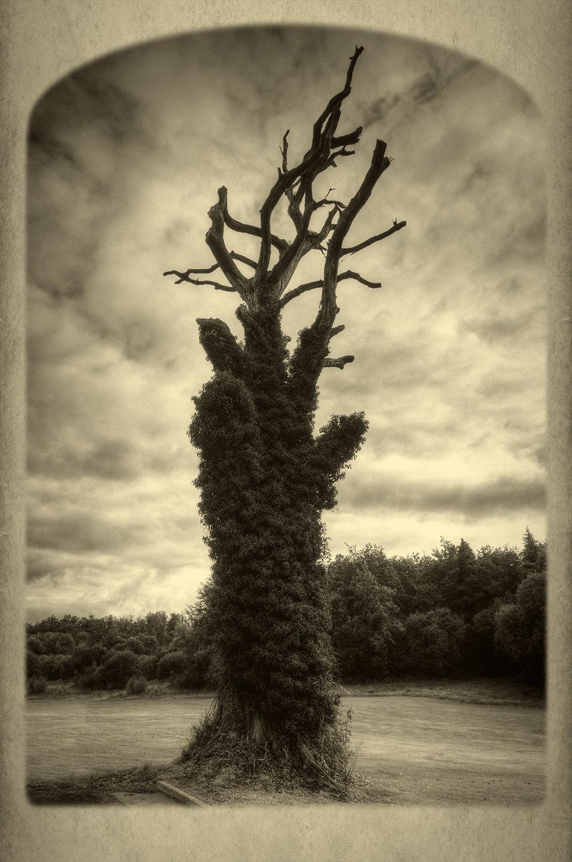 The Gloria Tree