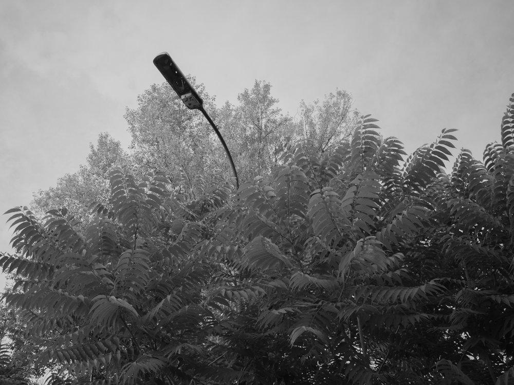 Image 37 -©Michael Borek