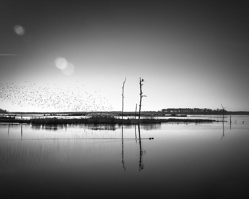 Image 38 -©Colleen Henderson