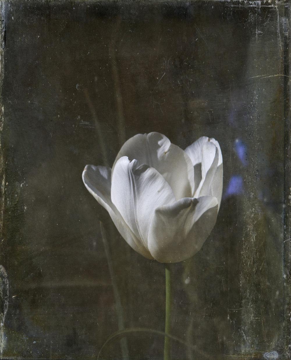 Image 41 -©Fred Zafran