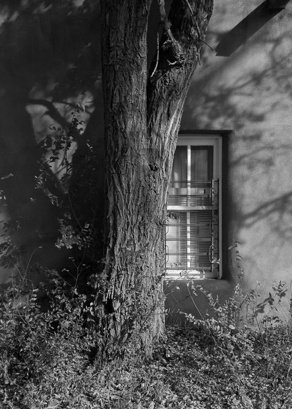 Image 44 -©Eric McCollum