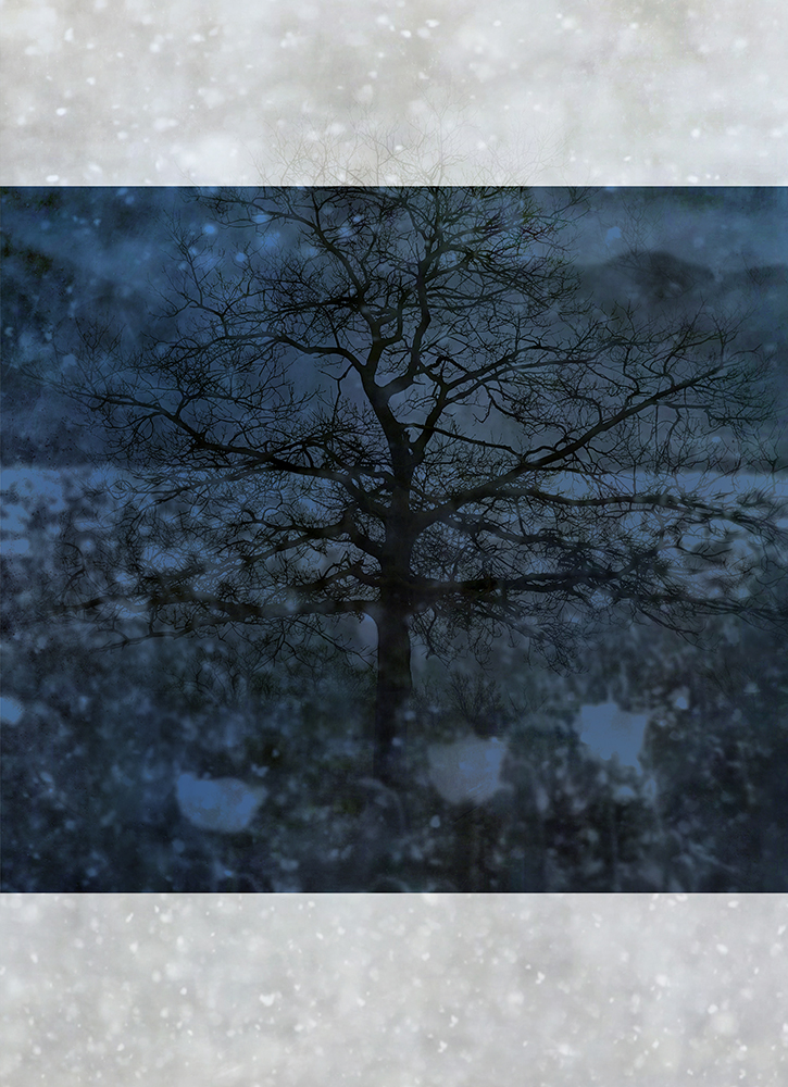 "Windows series: Song of ""Tree of Memory"""