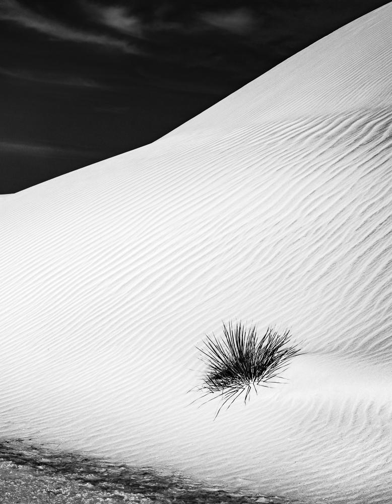 Yucca Dune