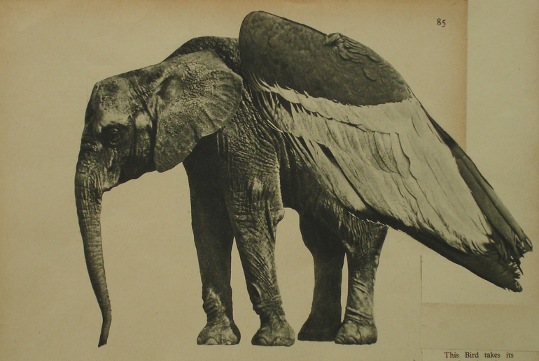 WINGED ELEPHANT