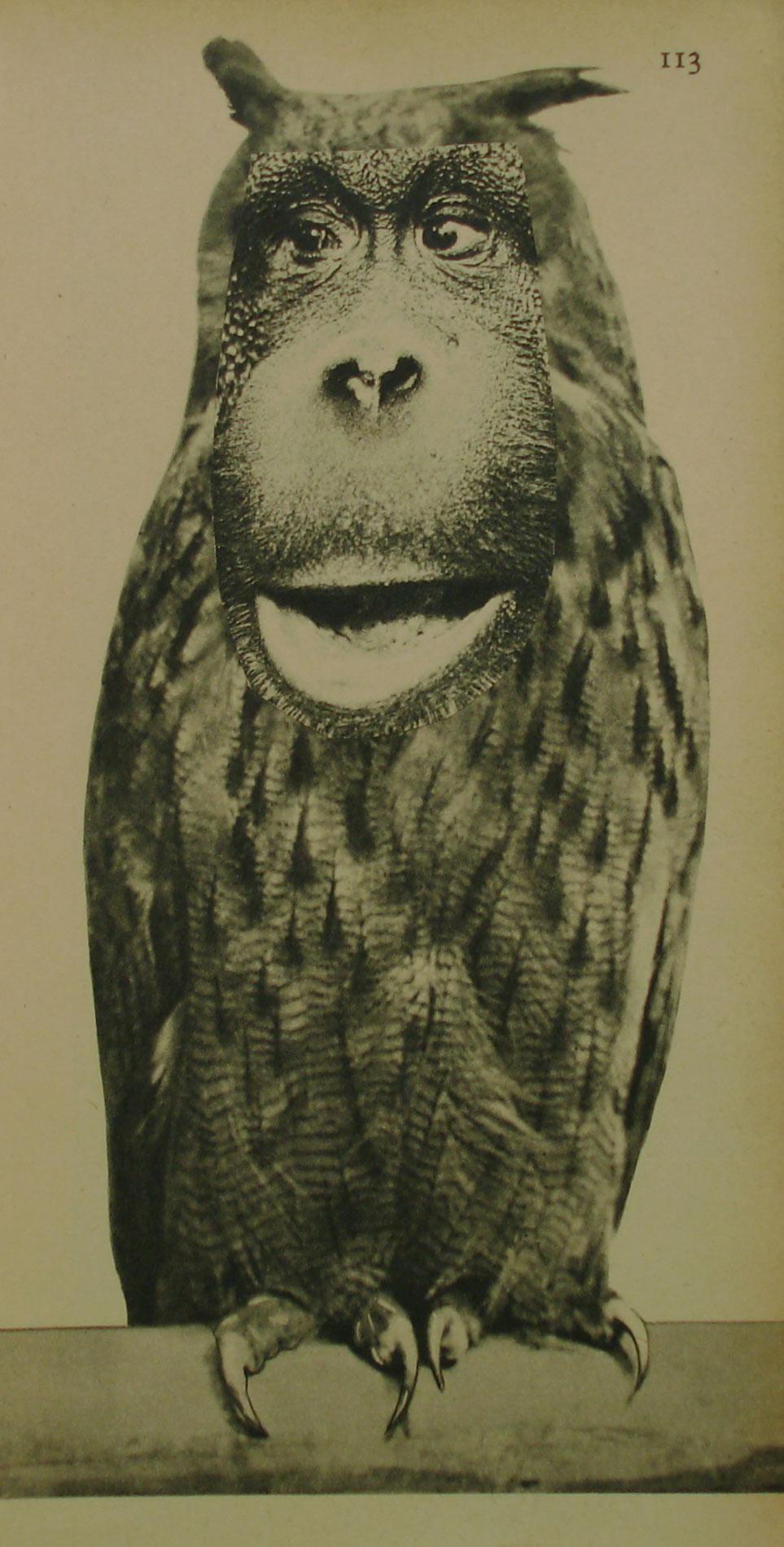 ORANGU OWL