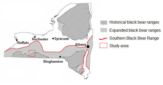 The historical and expanded black bear ranges in upstate New York. The range expansion, primarily of the southern ranges, encroaches northwards into central New York and urban cities, including Buffalo, Rochester, Syracuse, Binghamton, and the capital, Albany. (Adapted from NYSDEC 2007)