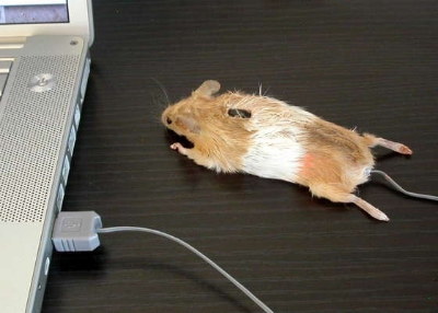 mousemouse