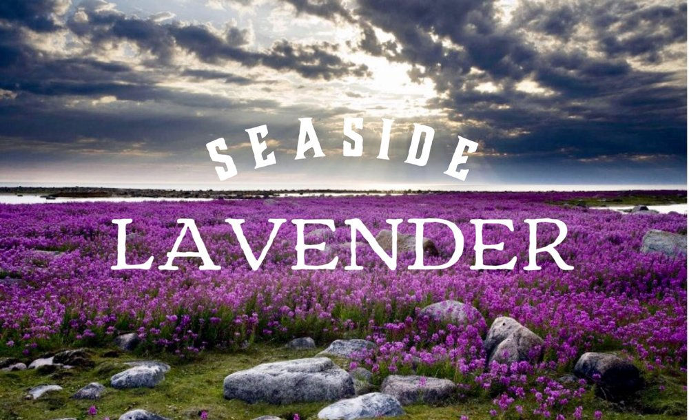 Essential Oils Collection: French Lavender
