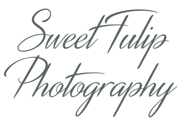 Sweet Tulip Photography