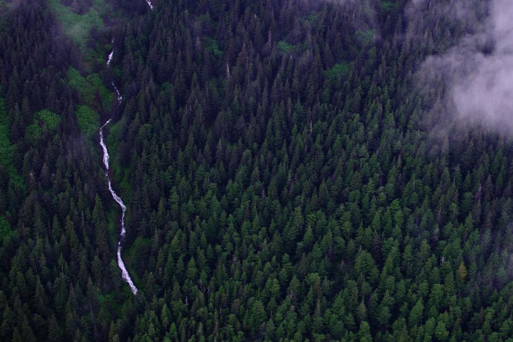 Woods (Alaska)
