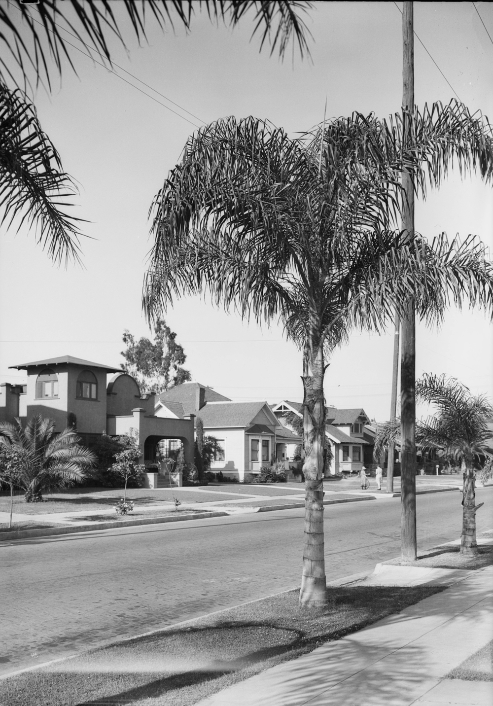 Palm_tree_for_View_Park_Los_Angeles_CA_1928_image.jpg