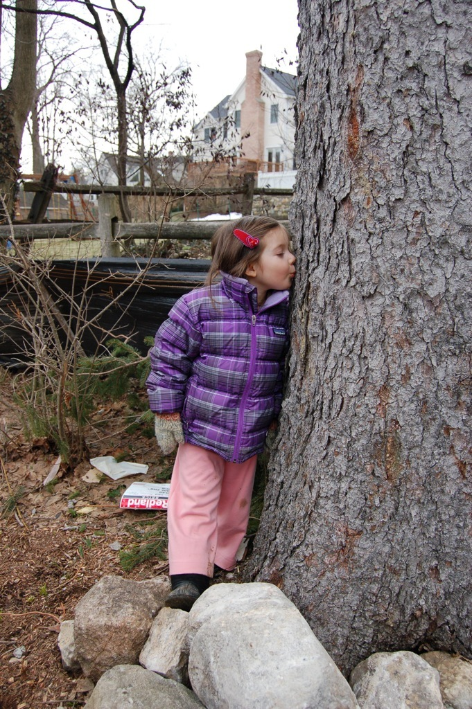 This is a photo of the home owner's daughter kissing the 85' spruce goodbye. The tree was in danger of falling and so we had it cut, dried and milled and used it to make almost all of the interior trim in the house.