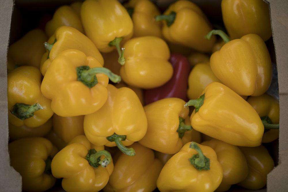 Wella's Kitchen - Taco Showdown Eastern Market '18