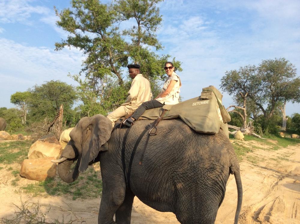 Camp Jabulani Elephant Safari