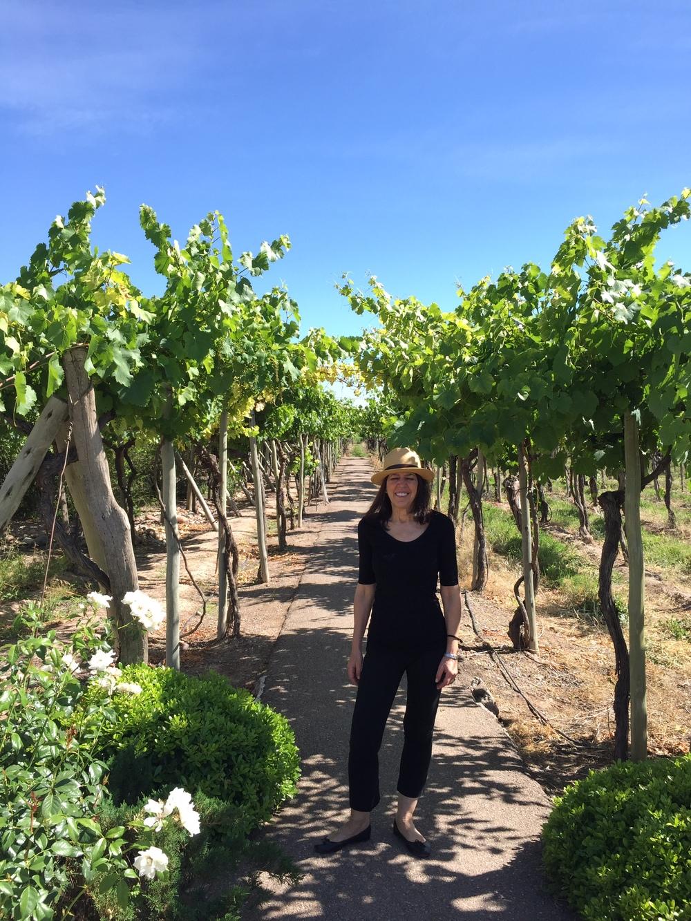 The Vines, Mendoza, Argentina