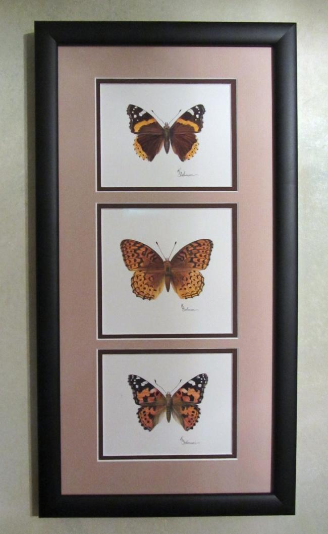 Canadian Butterflies II