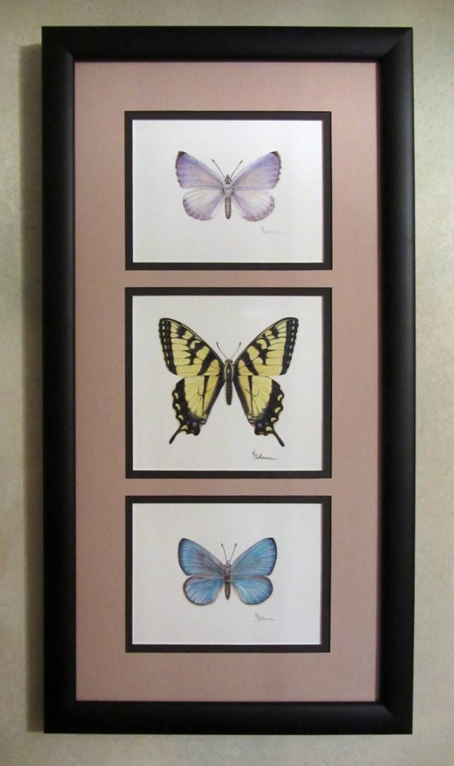 Canadian Butterflies I