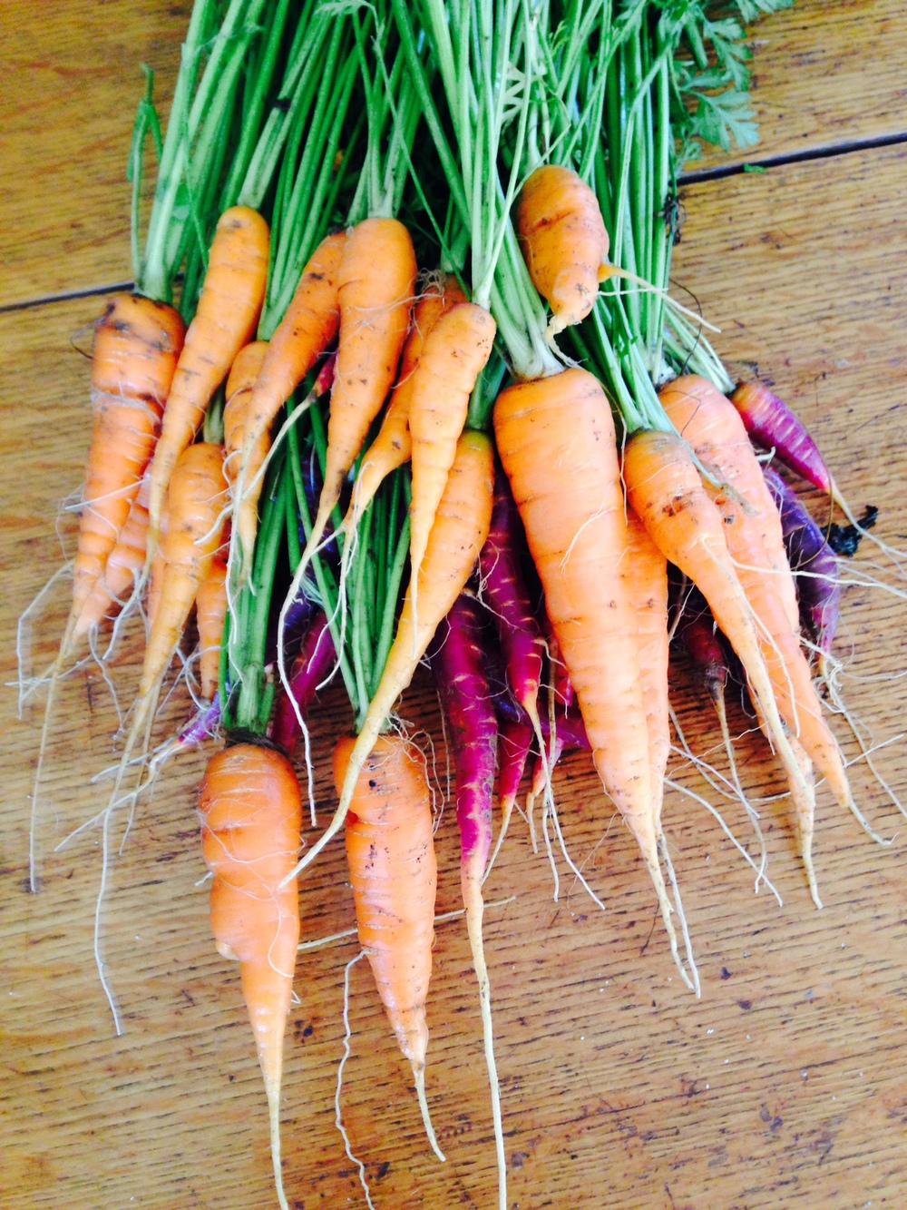 photo carrots.JPG
