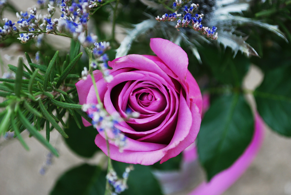 Purple Flowers 4.jpg