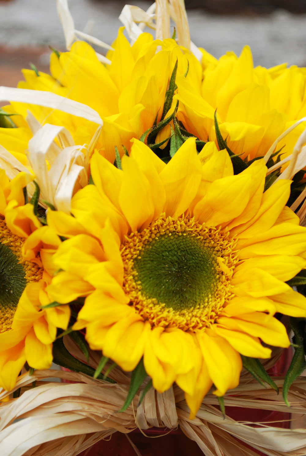 sunshine 1.jpg