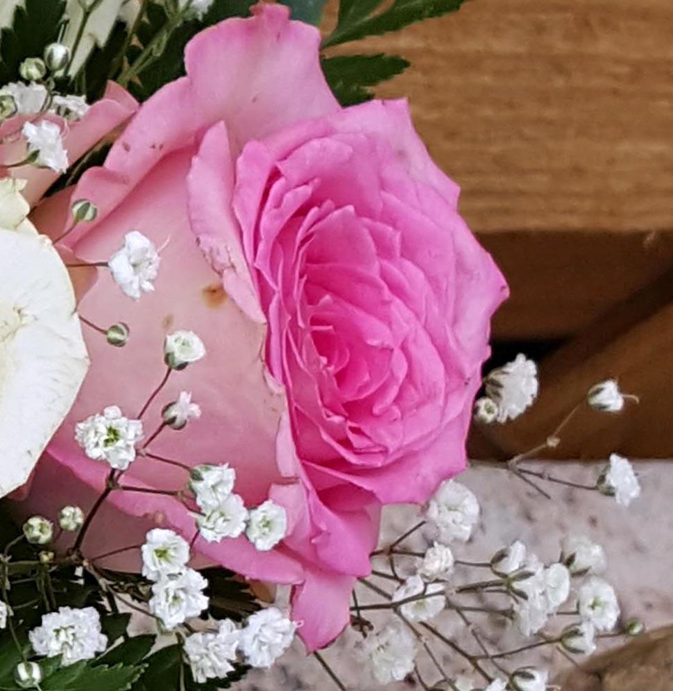 6 rosee 2 cut 2.jpg