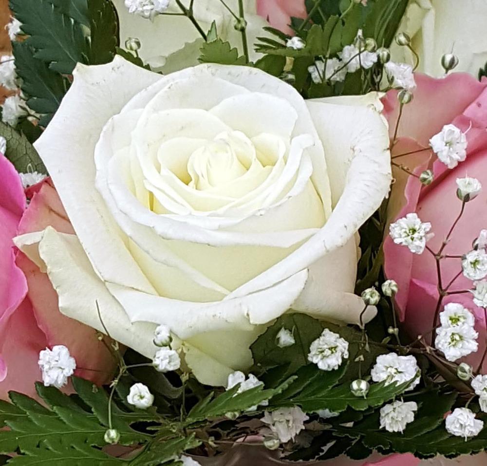 6 rose cut 1.jpg