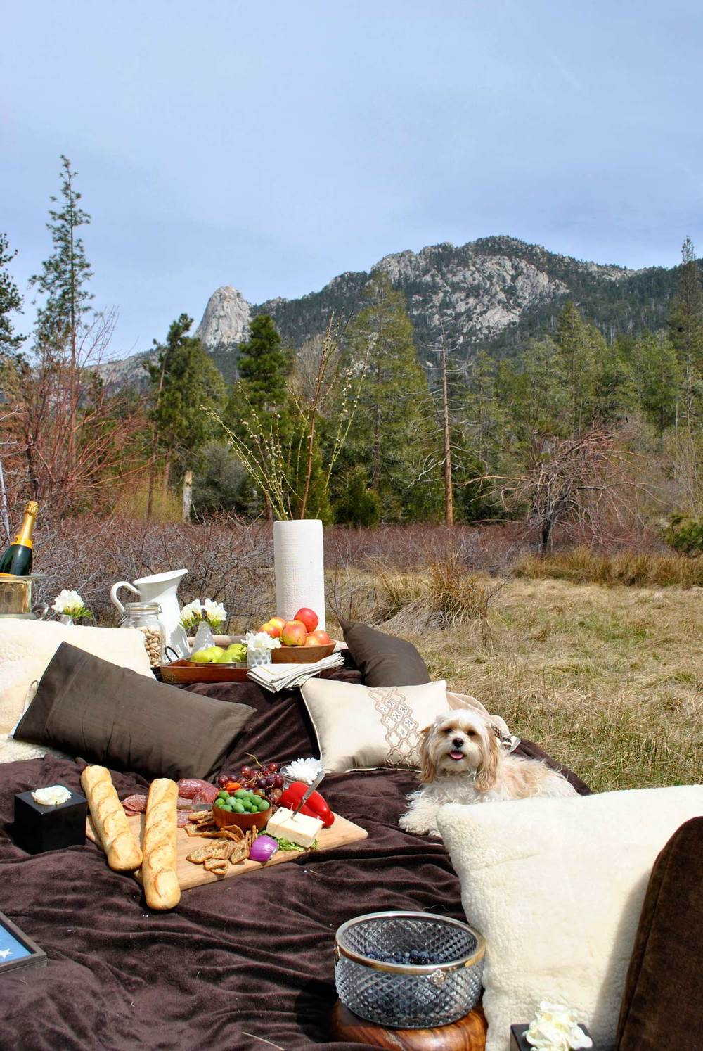 picnicfrolics.jpg
